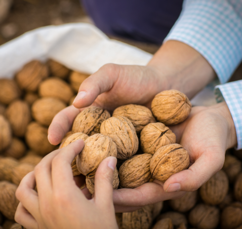 The quality: the reason why chilean walnuts are worldwide recognized