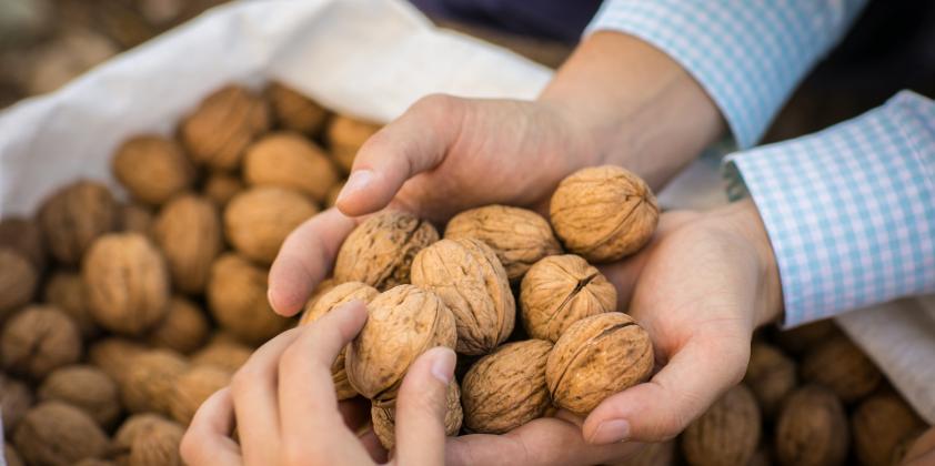 La calidad de las nueces chilenas es reconocida mundialmente