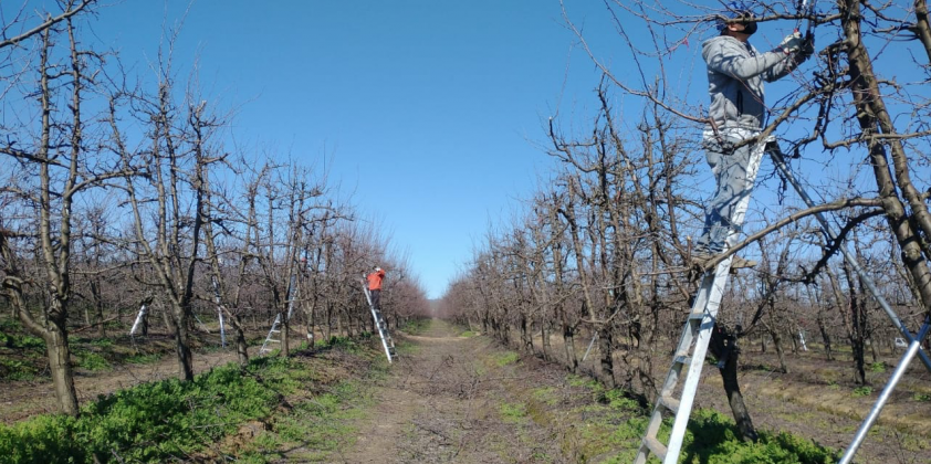 The pruning process in Superfruit